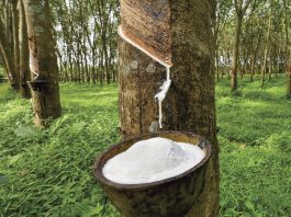 raw rubber collecting