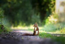 wildlife contact prevention